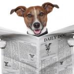 WMC PR newsletters